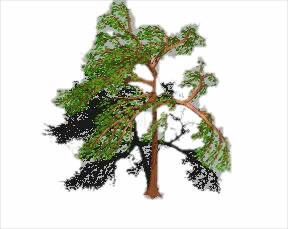 imagen Arbol 3d, en Arboles en 3d - Arboles y plantas