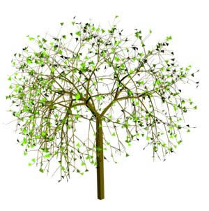 Planos de arbol 3d en arbustos en 3d arboles y plantas - Arboles y arbustos ...