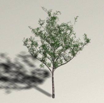 imagen Arbol alamo, en Arboles en 3d - Arboles y plantas