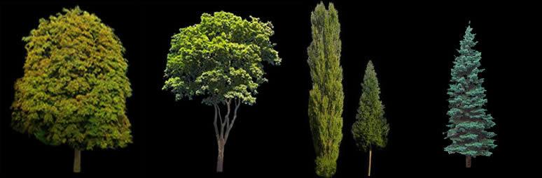 imagen Arboles - imagenes, en Follajes y vegetales - Texturas