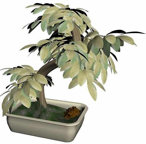 imagen Arbusto 3ds max, en Plantas de interior 3d - Arboles y plantas