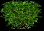 imagen Arbustos en 3d 002, en Arbustos en 3d - Arboles y plantas