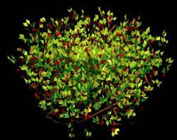 imagen Arbustos en 3d 004, en Arbustos en 3d - Arboles y plantas