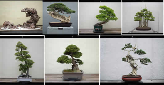 imagen Bonsais, en Follajes y vegetales - Texturas