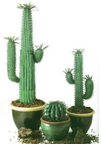 cactus en macetas con mapa de opacidad en fotografas para renders u arboles y plantas
