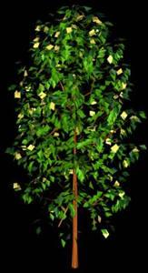 imagen Conifera 3d, en Coníferas en 3d - Arboles y plantas
