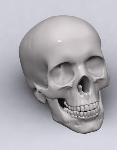 imagen Craneo humano 3d, en 3d - Personas