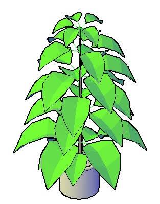 imagen Ficus planta, en Plantas de interior 3d - Arboles y plantas