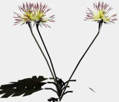 imagen Flores 3d, en Plantas de interior 3d - Arboles y plantas