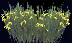 imagen Flores amarillas con mapa de opacidad, en Fotografías para renders - Arboles y plantas