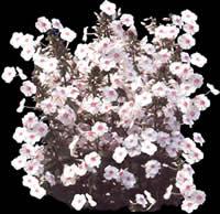 imagen Flores blancas con mapa de opacidad, en Fotografías para renders - Arboles y plantas