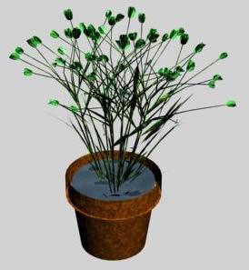 imagen Flores en maceta 3d, en Plantas de interior 3d - Arboles y plantas