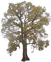 imagen Fotografia de árbol, en Fotografías para renders - Arboles y plantas