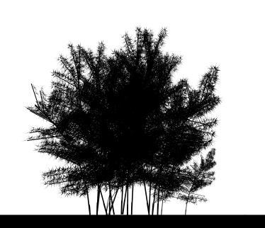imagen Guadual 3d, en Arbustos en 3d - Arboles y plantas