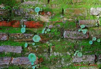 imagen Ladrillo visto para paisajismo, en Ladrillo visto - Texturas