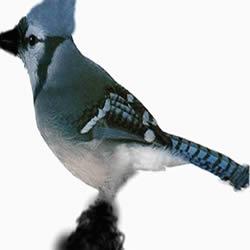 imagen Pajaro, en Animales 3d - Animales