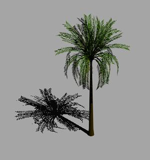 imagen Palmera 3d, en Palmeras en 3d - Arboles y plantas