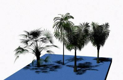 imagen Palmeras 3d, en Palmeras en 3d - Arboles y plantas