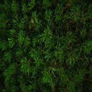 imagen Pasto, en Follajes y vegetales - Texturas