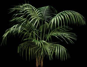 imagen Planta, en Fotografías para renders - Arboles y plantas