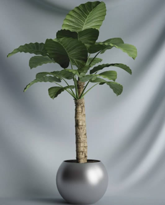 Arboles y plantas archives planos de casas planos de - Ver plantas de interior ...