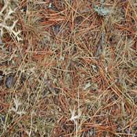 imagen Textura vegetal, en Follajes y vegetales - Texturas