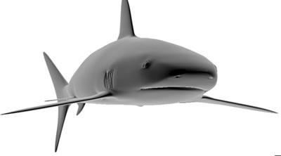 imagen Tiburón, en Animales 3d - Animales