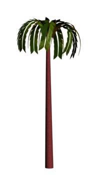 3d palmera, en Palmeras en 3d – Arboles y plantas