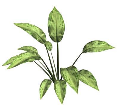 imagen Aglaonema 3d, en Arboles en 3d - Arboles y plantas