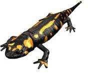 imagen Anfibio 3d, en Animales 3d - Animales