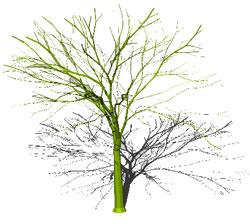 Planos de Arbol 3d, en Arboles en 3d – Arboles y plantas