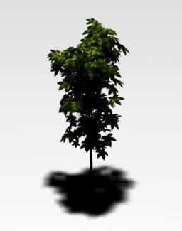 Planos de Arbol 3d, en Arbustos en 3d – Arboles y plantas