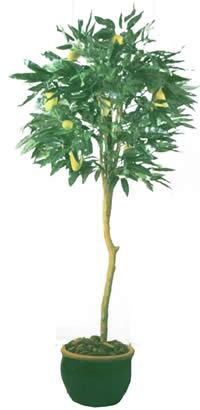 Arbol de mango en maceta con mapa de opacidad, en Fotografías para renders – Arboles y plantas