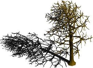 Planos de Arbol en 3d 001b1, en Arboles en 3d – Arboles y plantas