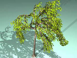 Planos de Arbol en 3d 002a, en Arboles en 3d – Arboles y plantas