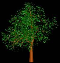Arbol en 3d 003, en Arboles en 3d – Arboles y plantas