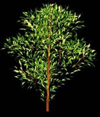 Arbol en 3d 007, en Arboles en 3d – Arboles y plantas