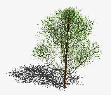 Planos de Arbol en 3d 008, en Arboles en 3d – Arboles y plantas