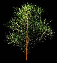 Arbol en 3d 008, en Arboles en 3d – Arboles y plantas