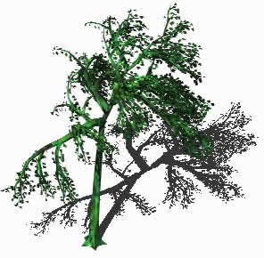 Planos de Arbol, en Arboles en 3d – Arboles y plantas