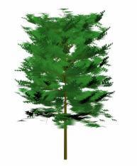 Arbol, en Coníferas en 3d – Arboles y plantas