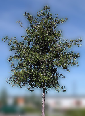 Arbol, en Fotografías para renders – Arboles y plantas