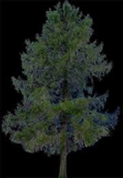 imagen Arbol mediano, en Fotografías para renders - Arboles y plantas