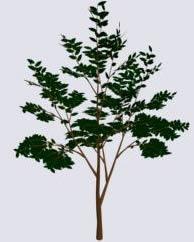 imagen Arbol pequeño 3d, en Arboles en 3d - Arboles y plantas