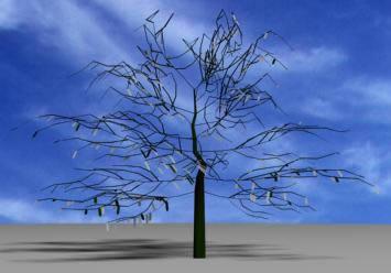 Arbol sin follaje 3d, en Arboles en 3d – Arboles y plantas