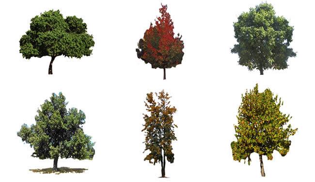 imagen Arboles - fotografias, en Fotografías para renders - Arboles y plantas