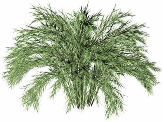 imagen Arbusto 1 3ds max, en Arbustos en 3d - Arboles y plantas