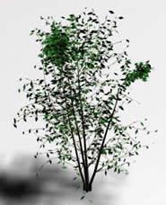 Arbusto 3d, en Arbustos en 3d – Arboles y plantas