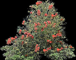 imagen Arbusto con flores rojas y mapa de opacidad, en Fotografías para renders - Arboles y plantas