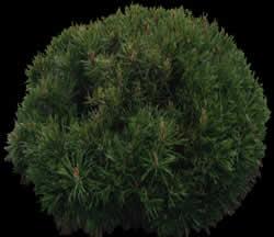 Arbusto  con mapa de opacidad, en Fotografías para renders – Arboles y plantas
